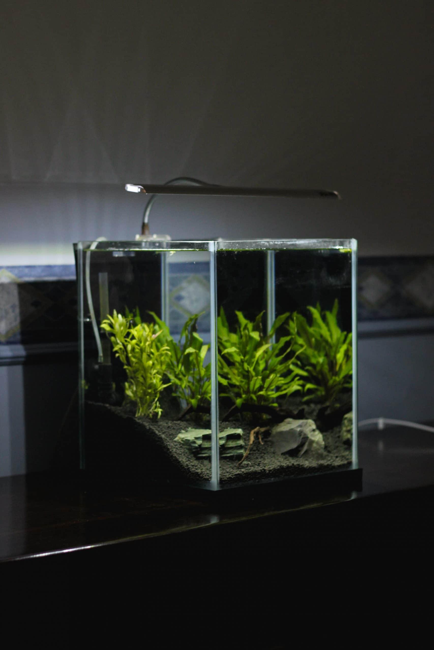 Self-decorated aquariums and fish tanks